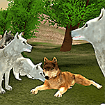 Wild Wolves Hunger Attack