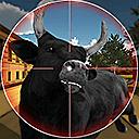 Bull Shootingg
