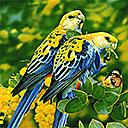 Пъзели на Птици